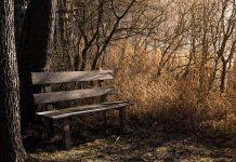 Ławka w lesie, fajne zdjęcie, quiz o lesie