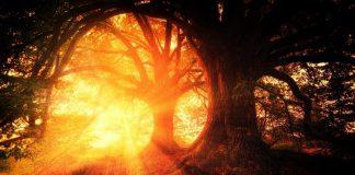 Baśniowy las-wschód słońca w lesie