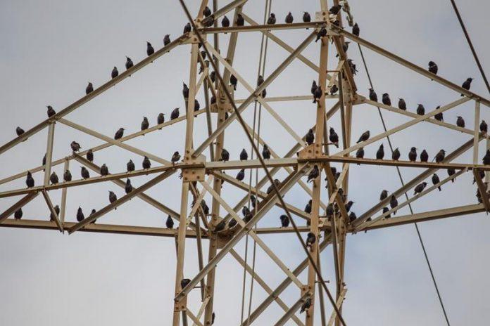 ptaki siedzące na słupie wysokiego napięcia