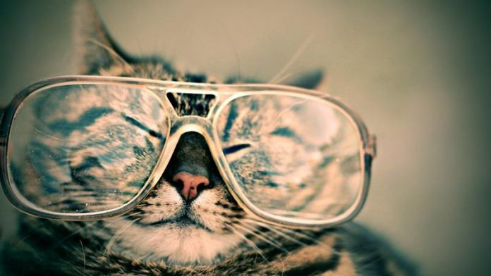 Śmieszny kot w okularach - quiz o kotach