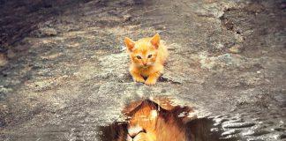 Kot odbijający się w lustrze, quiz tematyczny o imionach