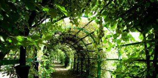 Tunel roślinny, ekologiczna architektura miejska, najlepszy quiz ogólny