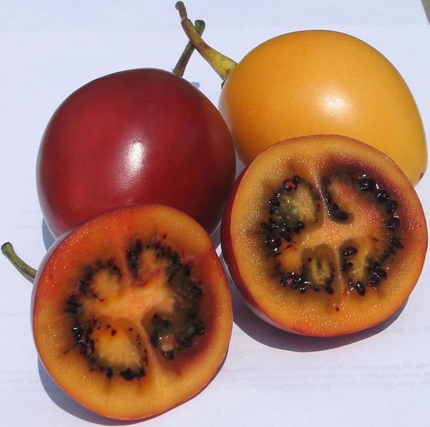 Tamarillo-Cyfomandra grubolistna, czerwone i żółte, egzotyczny owoc