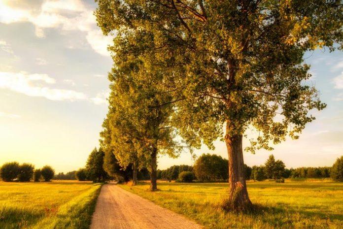 Polna droga z rosnącymi wzdłuż drzewami